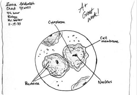 cellsweb