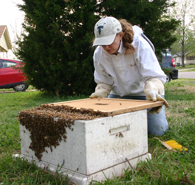 How a beekeeper dresses like a woman while rescuing a swarm.